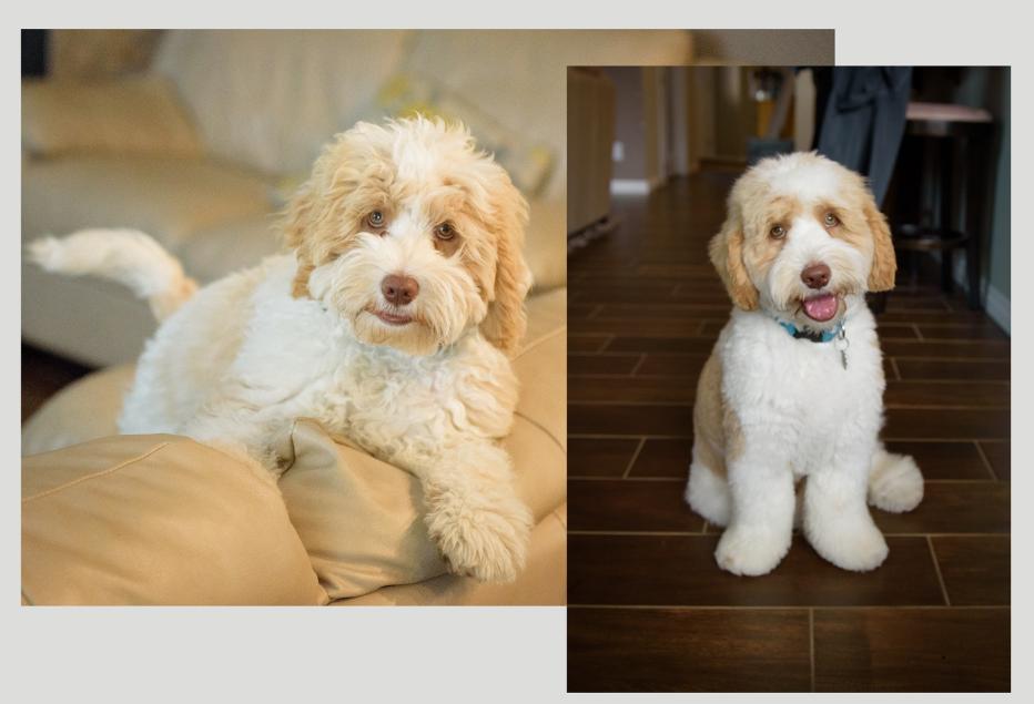 Jasper at 5 months. Thanks Christy.