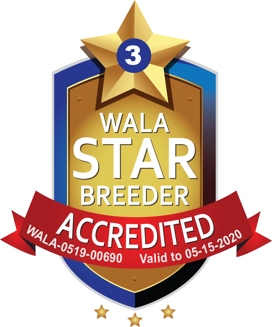 Bow Valley WALA Star Logo-0519-00690.png