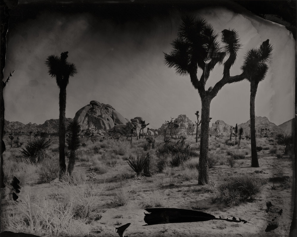 23_Eric+Overton_Joshua+Trees+with+Rock+Formations,+2016.jpg