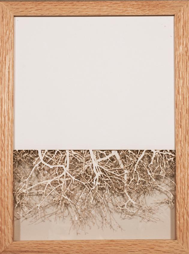 Wendy Wischer    Wooded I   laser-cut paper, 13.5 x 10 in.