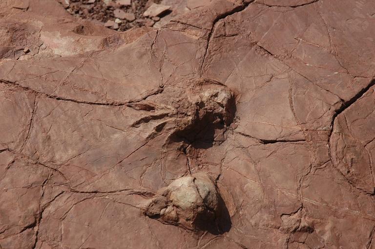 Prehistoric Trackways.jpg