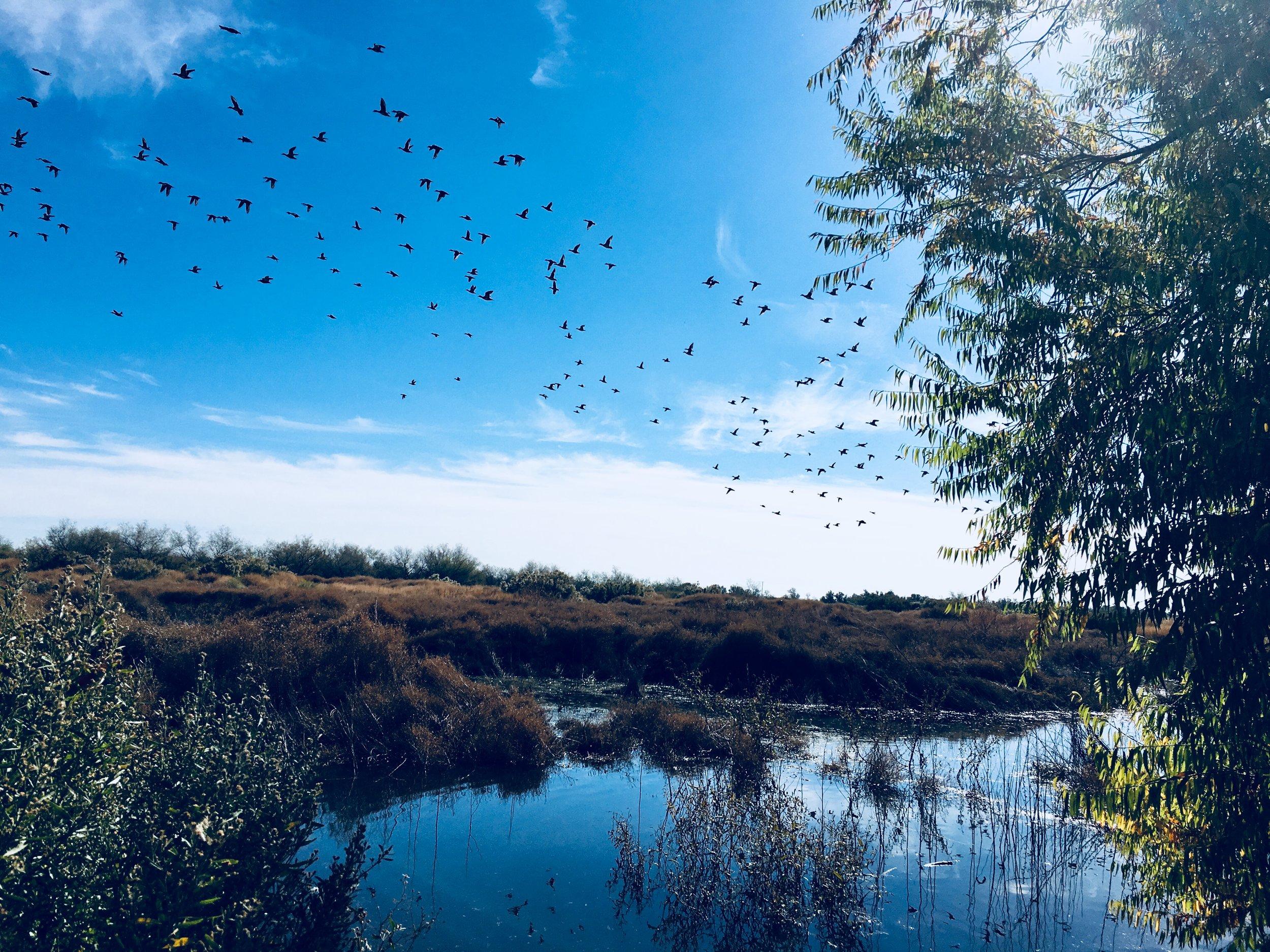 111117 Rio Bosque wetlands horizontal.jpg