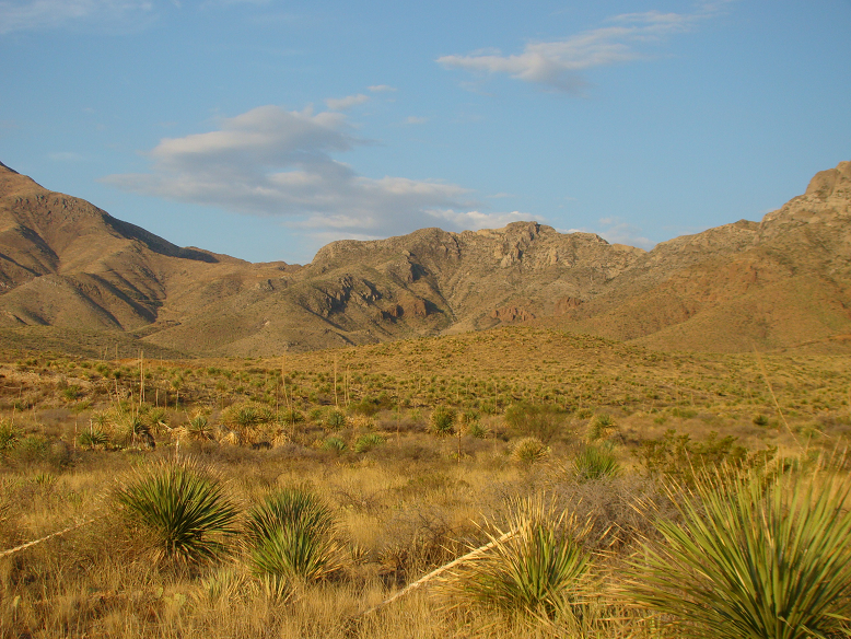 Franklins from Sotol Forest.png