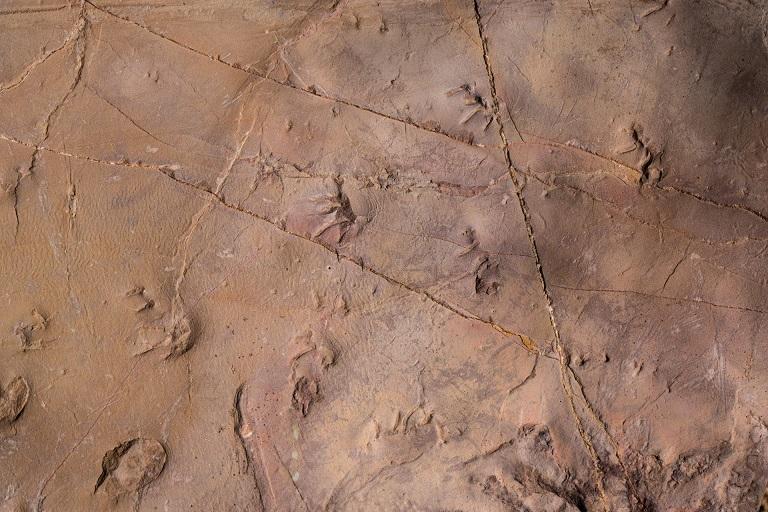 Prehistoric Trackways Flood.jpg
