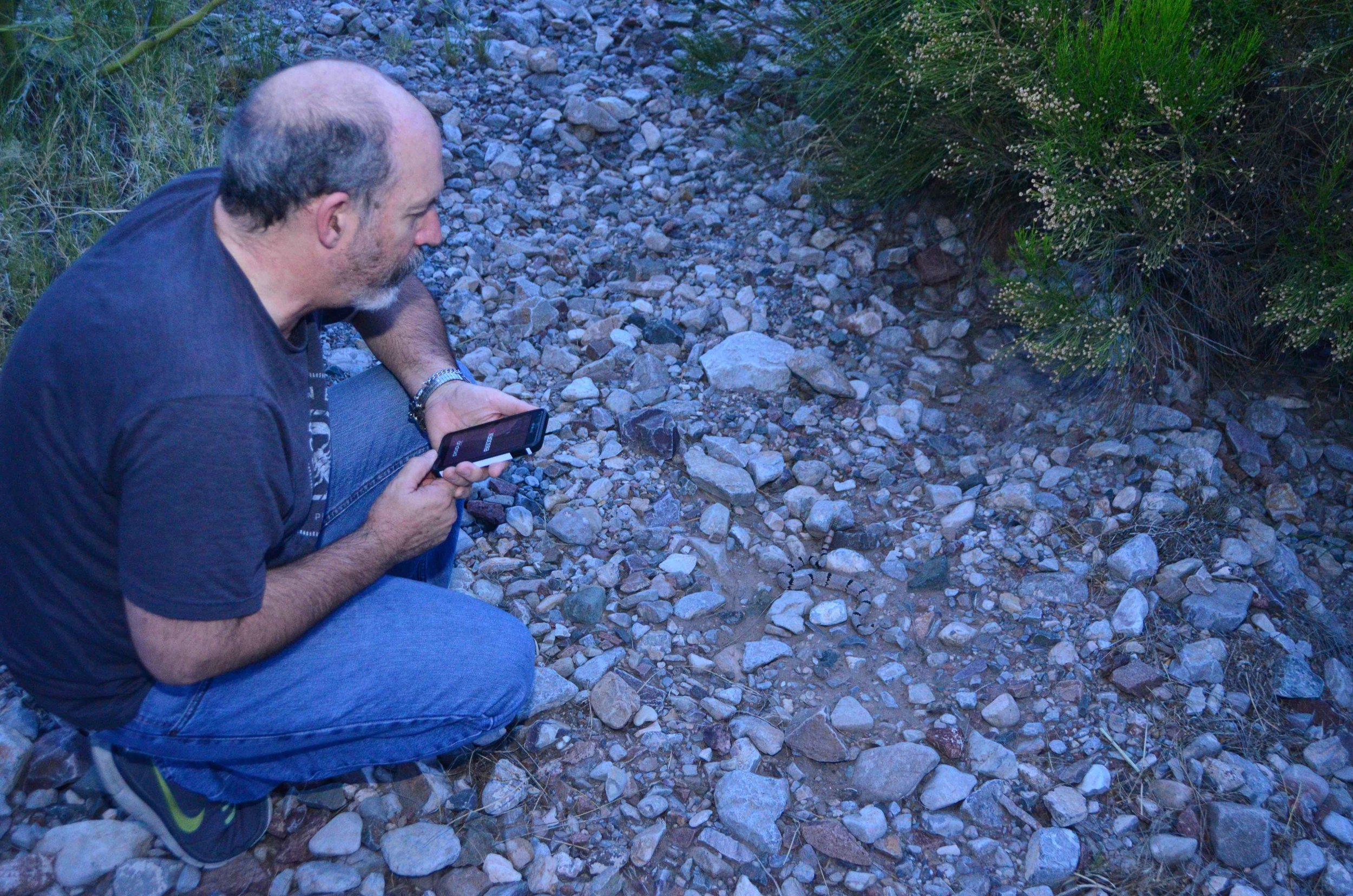 And who else would spot the banded rattlesnake? Of course, it was Dr. Paul Hyder.