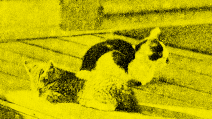 Alcoholic kittens lacking the desire to play. / 1896 /  Popular Science Monthly , Vol 50 / public domain via  Wikimedia Commons