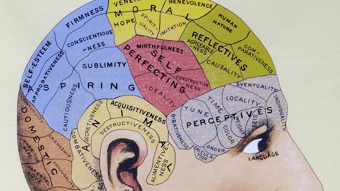 Detail of vintage phrenology illustration / Source unknown