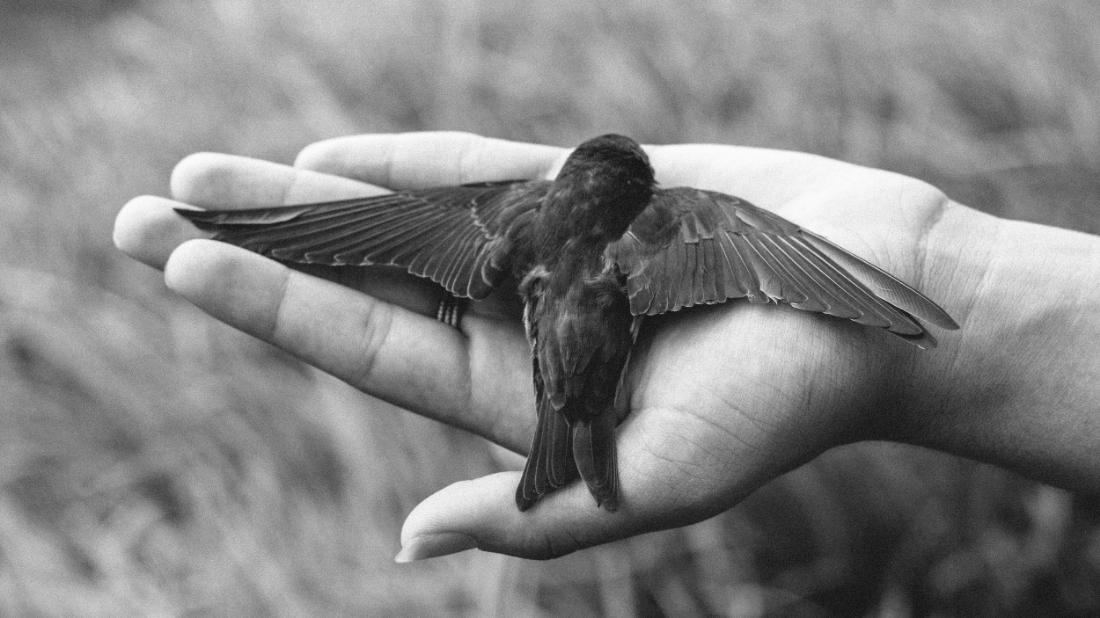 Bird  / 2013 / Mateus Lucena / CC via  Flickr