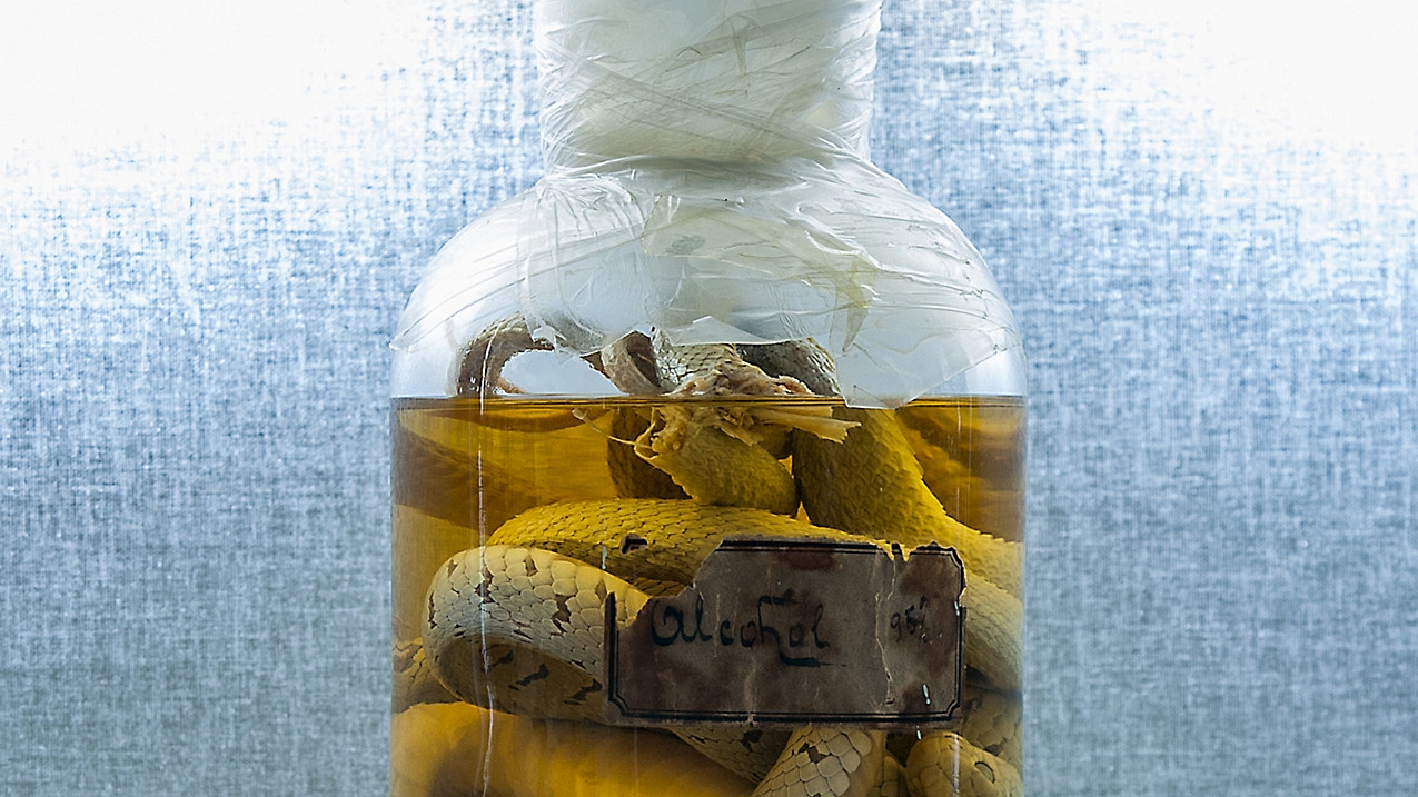 Snake preserved in alcohol in a glass container  [detail]  / 2016 / SALTOnline / CC via New Old Stock