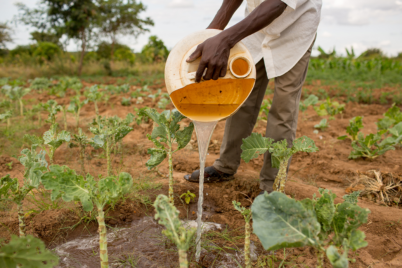 <p><strong>Hunger</strong>Helping farmers grow more food.<a href=/hunger>Learn More →</a></p>