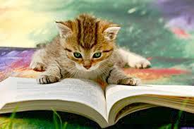 Kitten reading.jpg