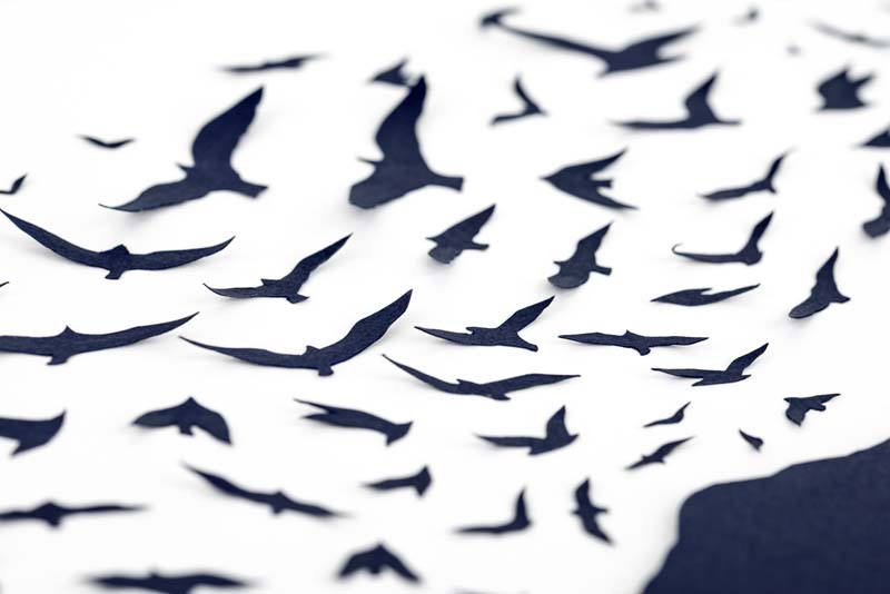 Sarah Dennis BBC Birds 02 Jo Hounsome Photography.jpg
