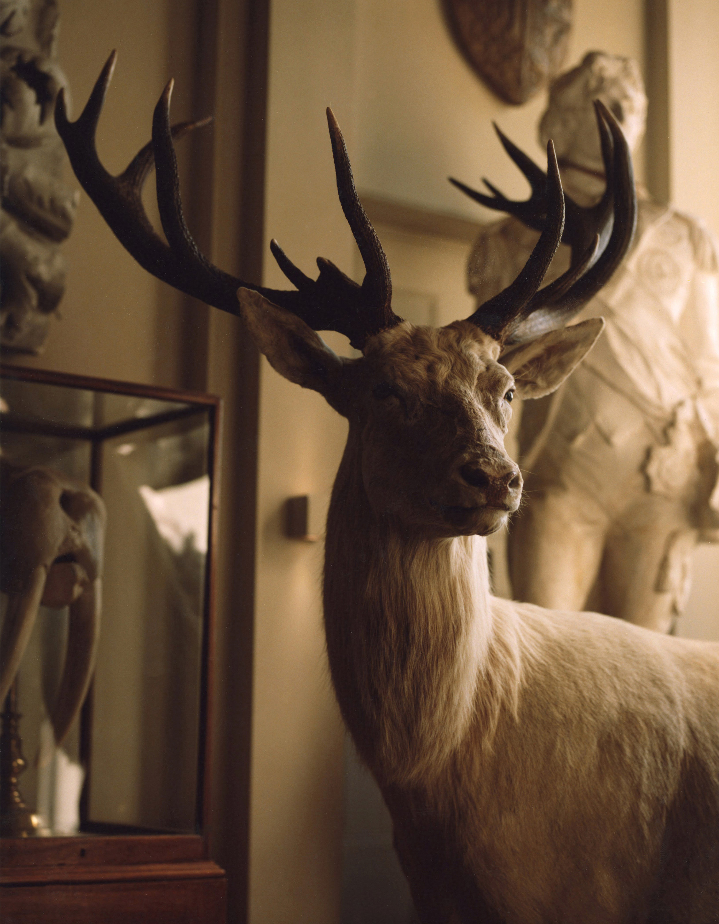 Deer stalking with Brett Graham for The Financial Times Magazine