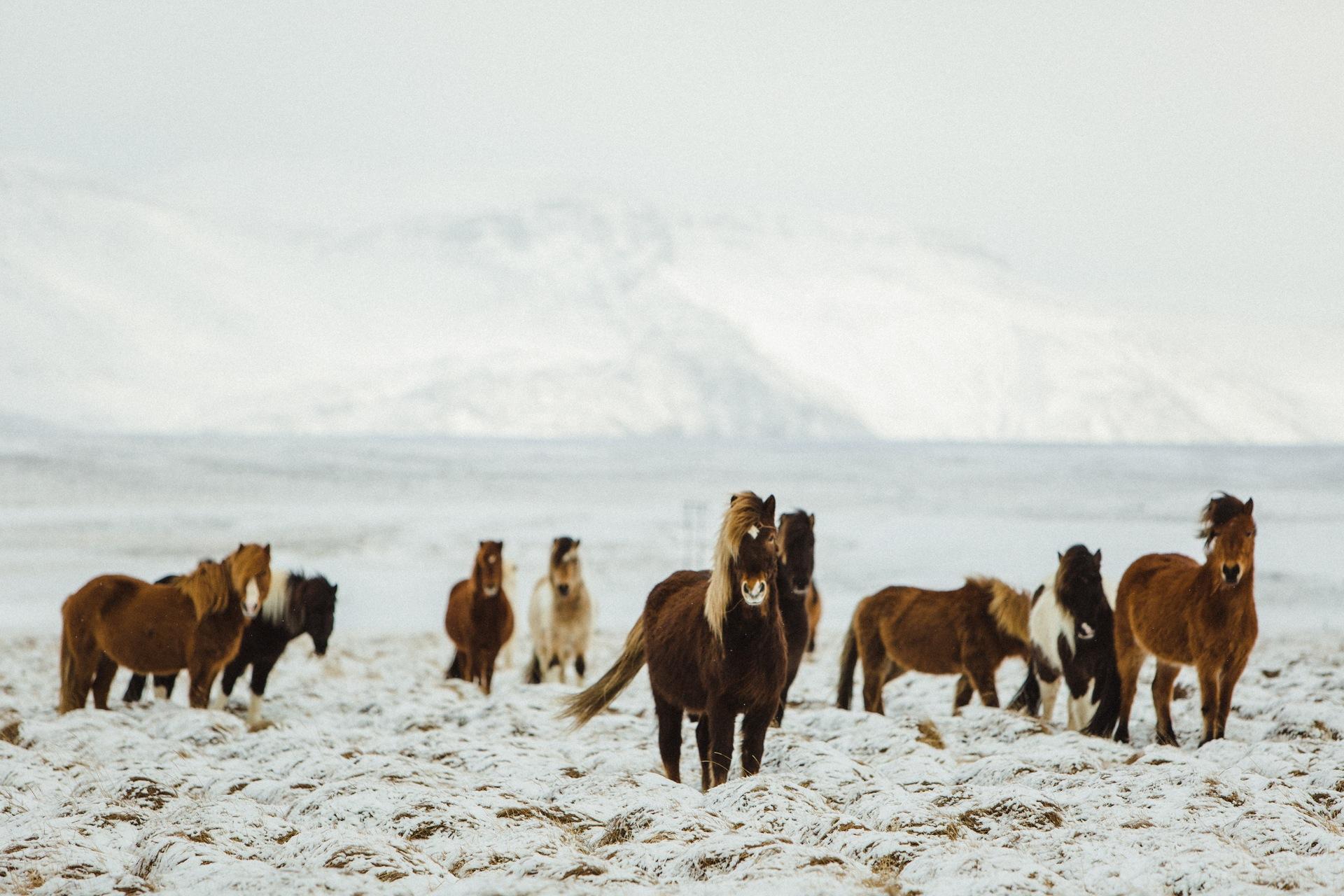 Iceland-2014-roadtrip-1.jpg