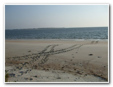 Turtle Tracks - Rover Boat Tours