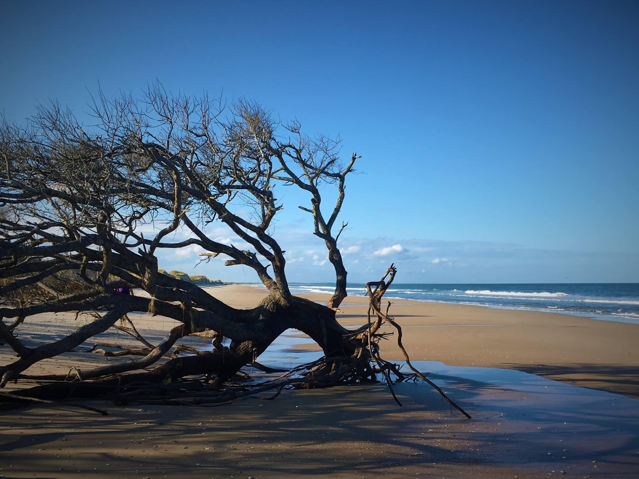 tree after Irma.jpg