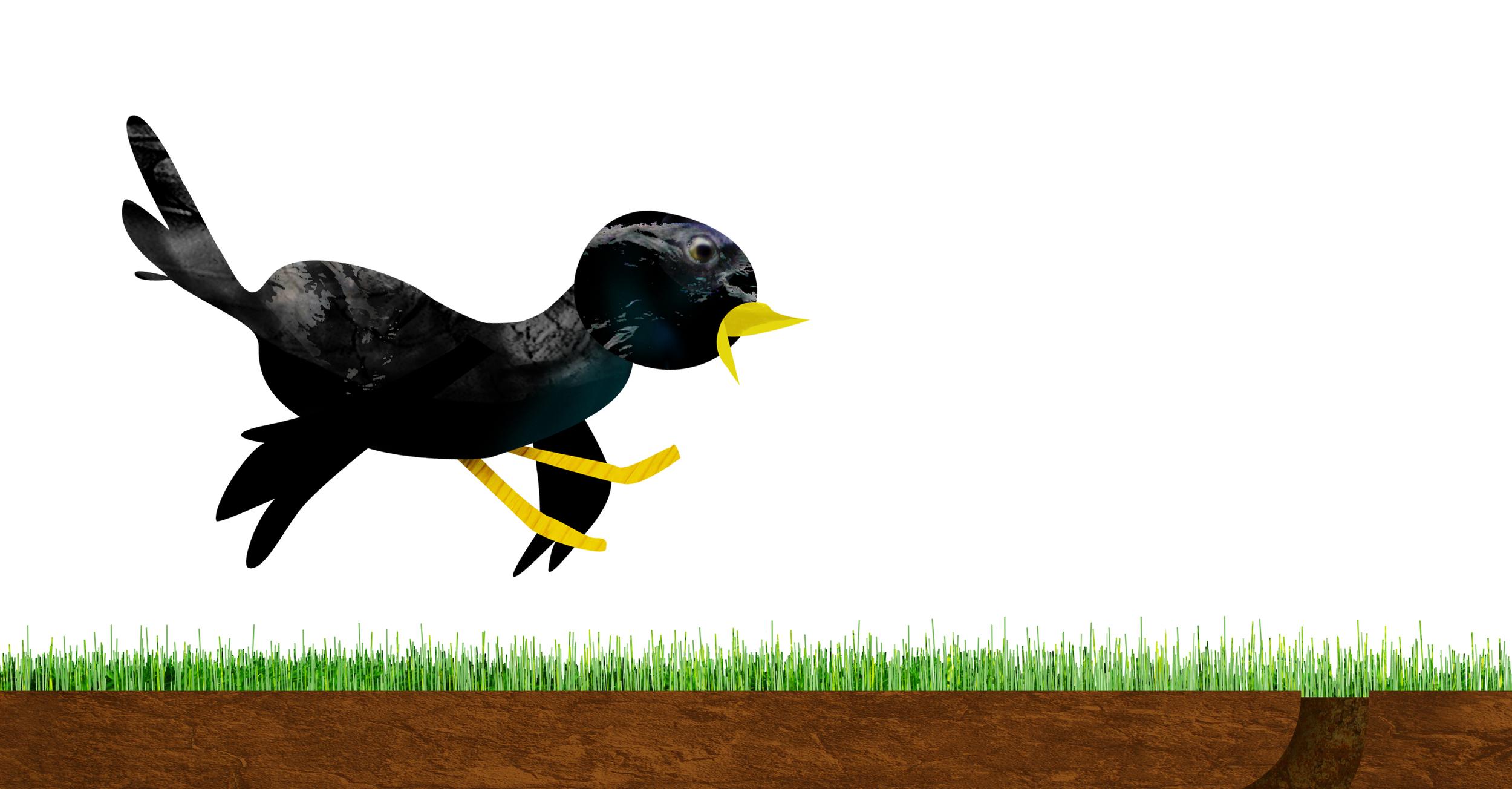 Click on the bird.