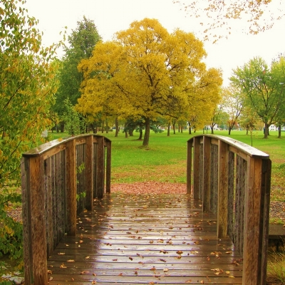 Bridge to a Tree.jpg