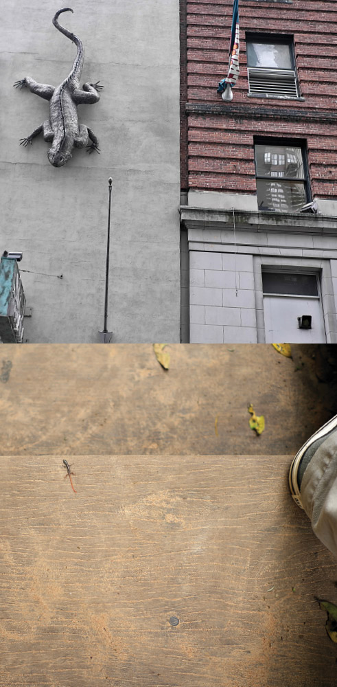 As Above, So Below   Lizard sculpture / Lizard