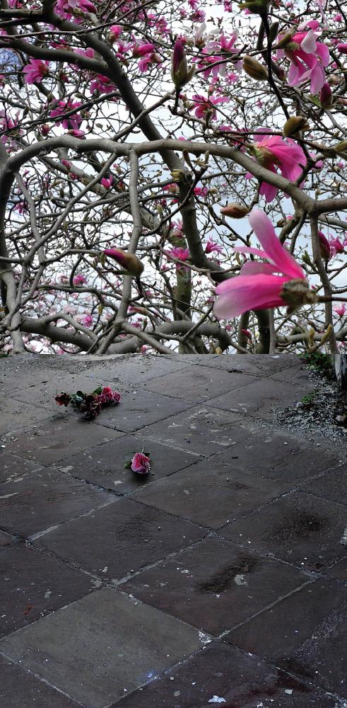As Above, So Below   Pink flowers