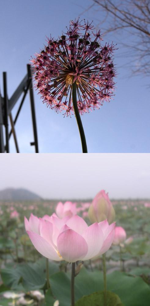 As Above, So Below   Pink flower