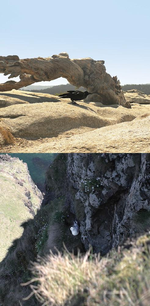 As Above, So Below   Black bird / White bird