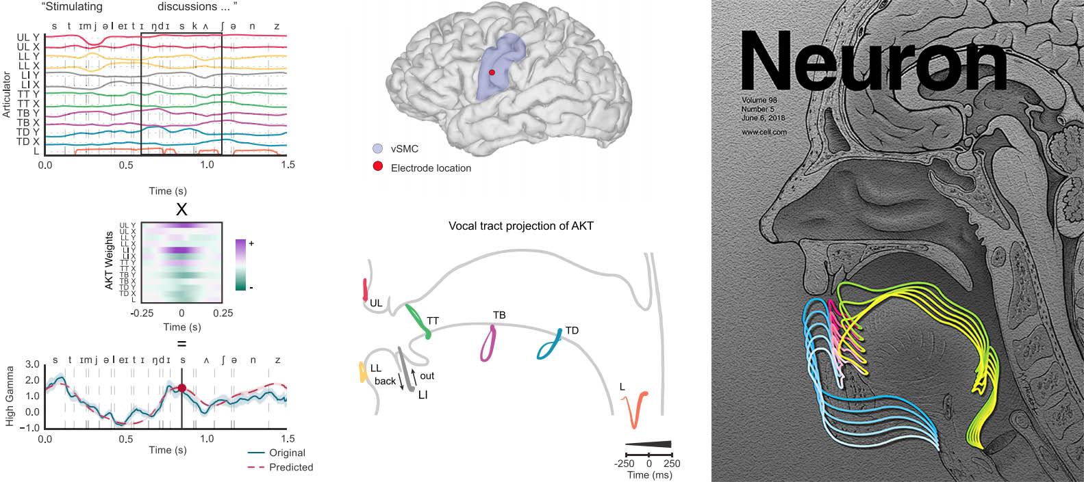 Chartier, J., Anumanchipalli, G.K., Johnson, K., & Chang, E.F. (2018).  Encoding of Articulatory Kinematic Trajectories in Human Speech Sensorimotor Cortex.  Neuron , 98(5): 1042-1054. doi:10.1016/j.neuron.2018.04.031.