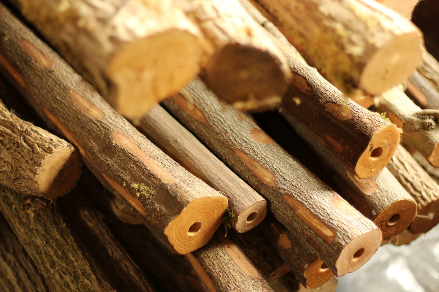 Dogwood and Eldertrunks for future fujara making...