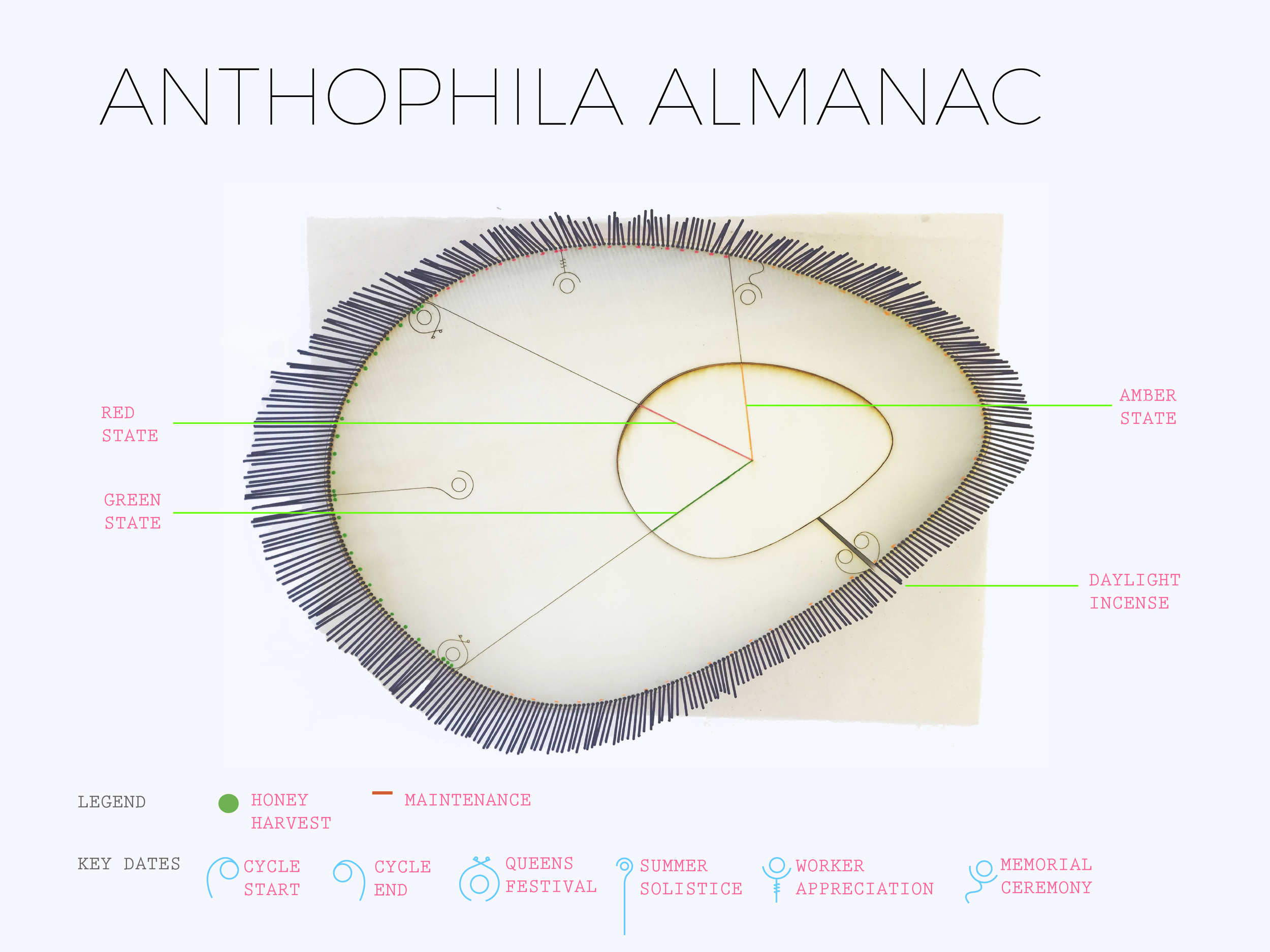 Anthophila Reveries: Speculative Calendar Prototype