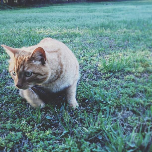 cat as hunter