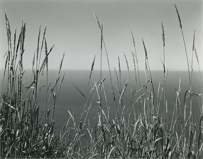 "Grass Against Sea,   1937. Gelatin silver print, printed by Cole Weston. Image measures 7 1/2 x 9 1/2 inches. From  Edward Weston Portfolio . Print No. 8 of set no. 37. Edition of 50. Published 1971 by Witkin-Berley Ltd., NY. Stamped ""Negative by Edward Weston Print by (signed) Cole Weston"" on mount back. Portfolio label, neg, no. SC-BS-2G and title in pencil by Cole Weston on mount back. Inventory #C0733.  Terms  