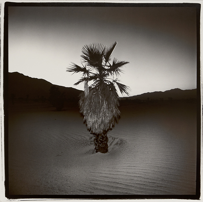 Palm #1,   1976. Vintage split-toned gelatin silver print. Signed, titled and dated in pencil on print back. Image measures 15 x 15 inches. Inventory #C1488.  Terms  |  Inquire