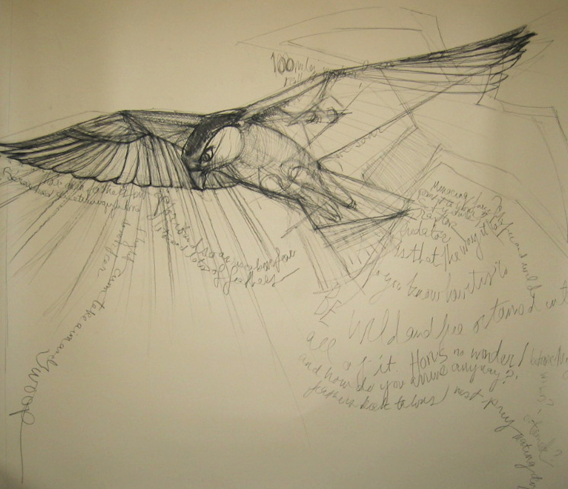 Study for falcon sculpture I , 2014 charcoal on paper  48 x 53 inches