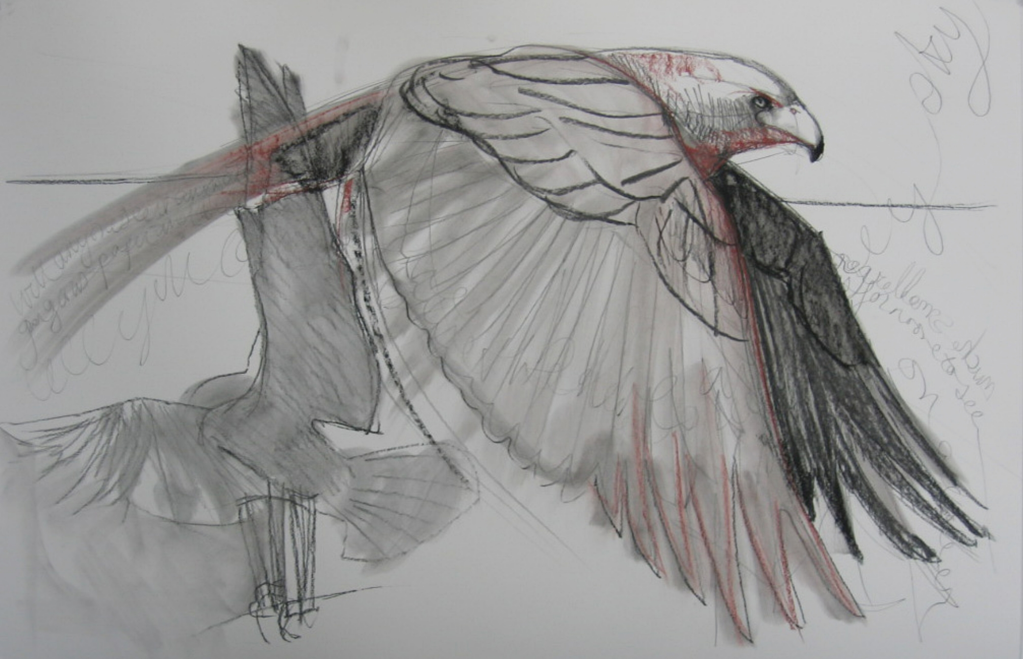 Falcon Study II , 2014 charcoal and conte on rag paper 30 x 44 inches,