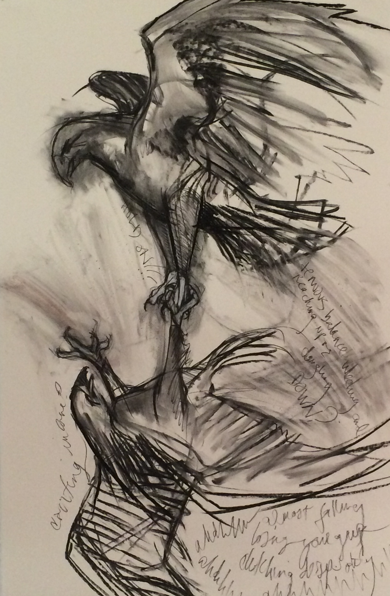 Study for Predator:Sky Dance I , 2015 charcoal on Arches paper 22 x 30 inches