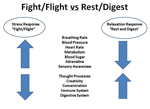 """Being in a constant state of stress and anxiety, called """"Fight/Flight"""", causes many changes in your body from increased blood sugar &adrenaline, as well as lowered immunity and poor digestion. The goal to fix your anxiety is to promote the """"Rest & Digest"""" response in your body more often, to counteract the effects of constant stress."""
