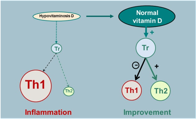 Source:Contribution of vitamin D insufficiency to the pathogenesis of multiple sclerosis,https://www.ncbi.nlm.nih.gov/pmc/articles/PMC3582312/