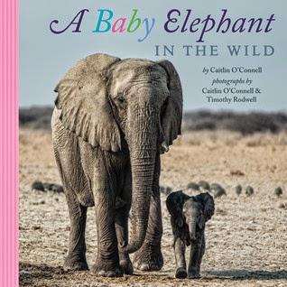 babyelephantwild.jpg