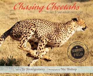 chasingcheetahs.jpg