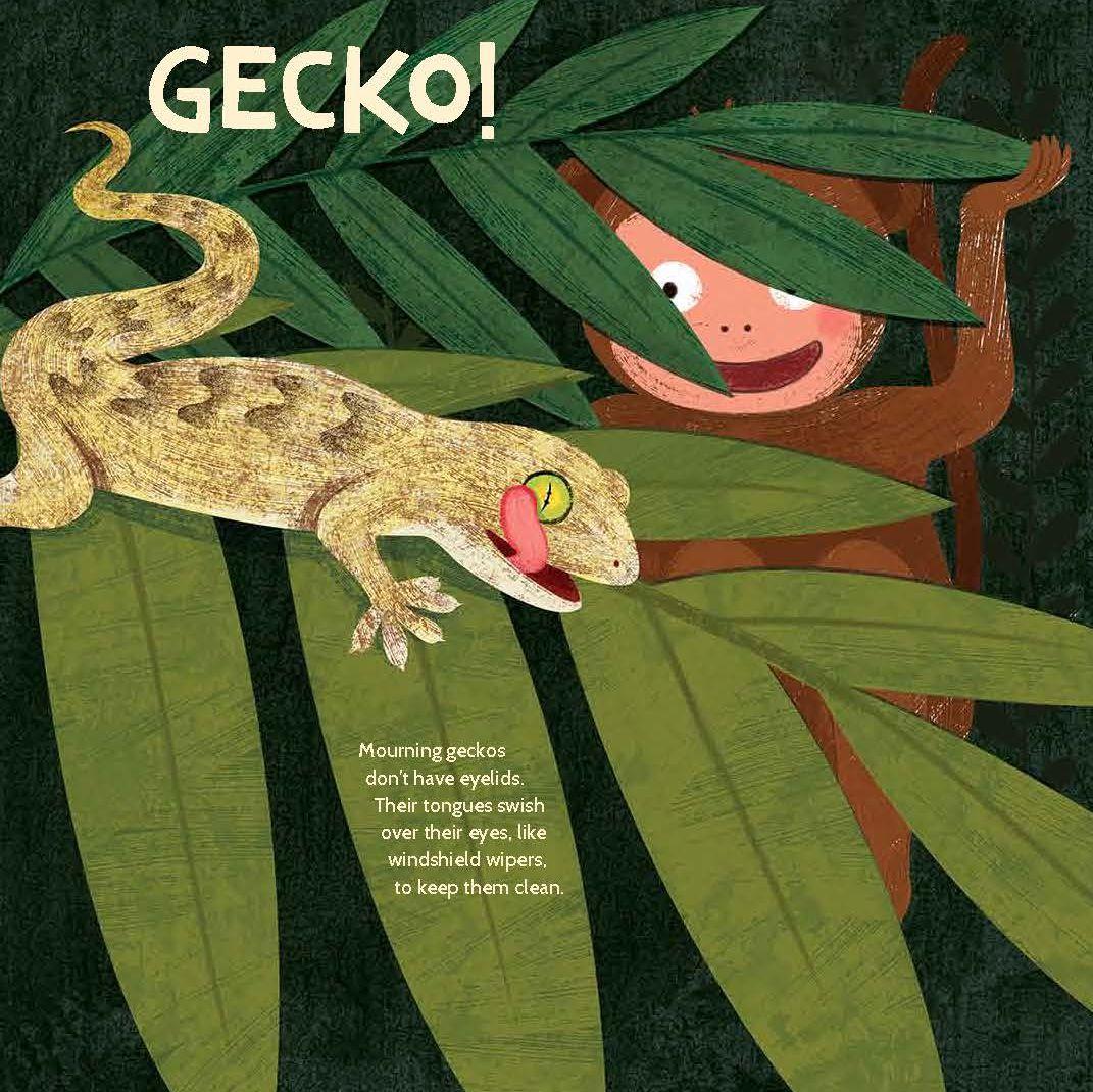 photo1-gecko.jpg