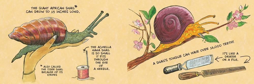 snail2.jpg