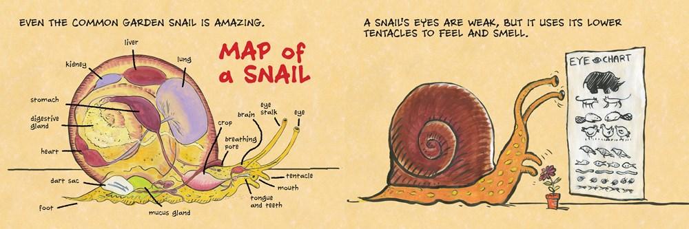 snail3.jpg