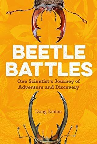 beetlebattles.jpg