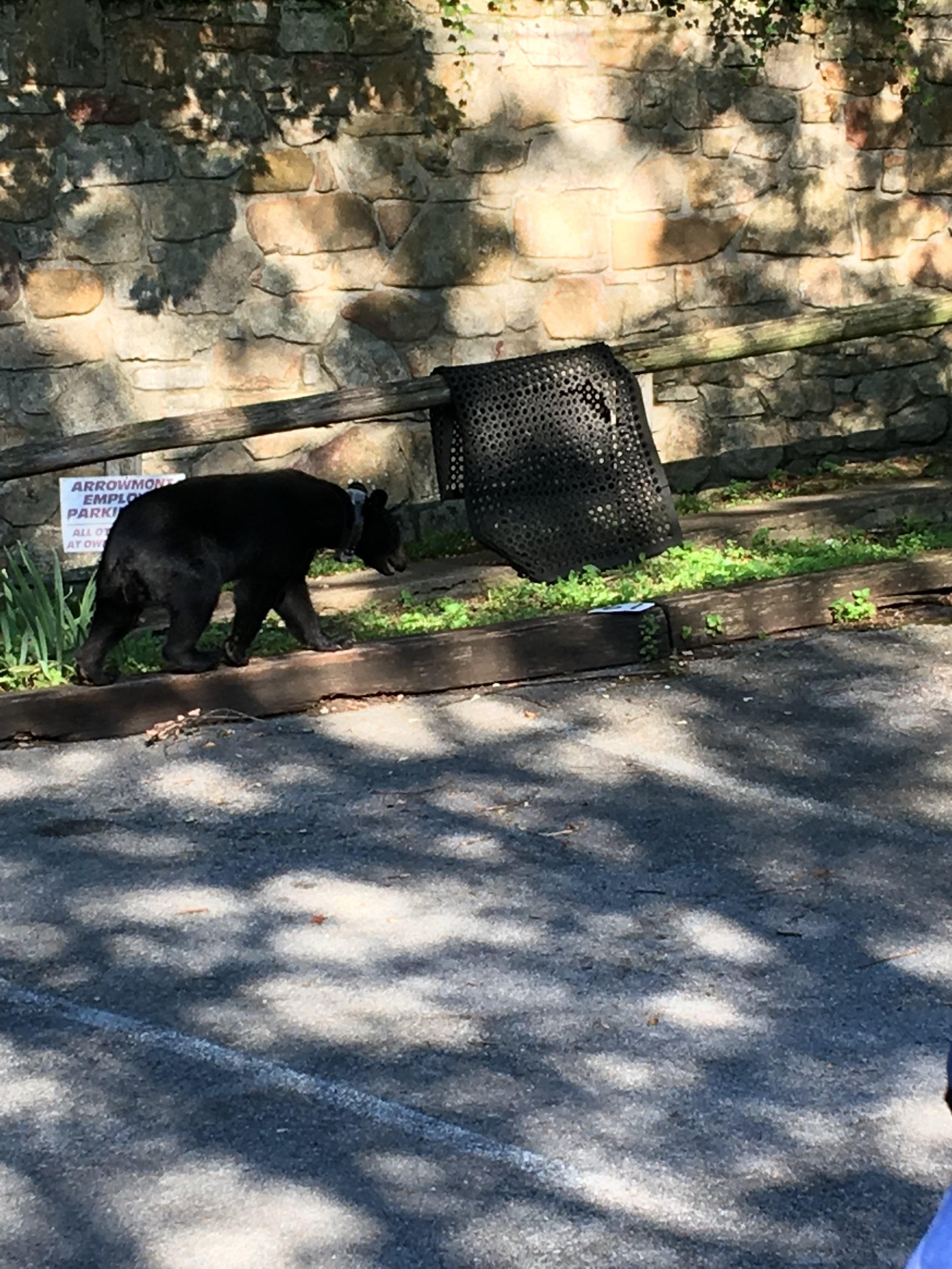 bear+at+Arrowmont.jpg