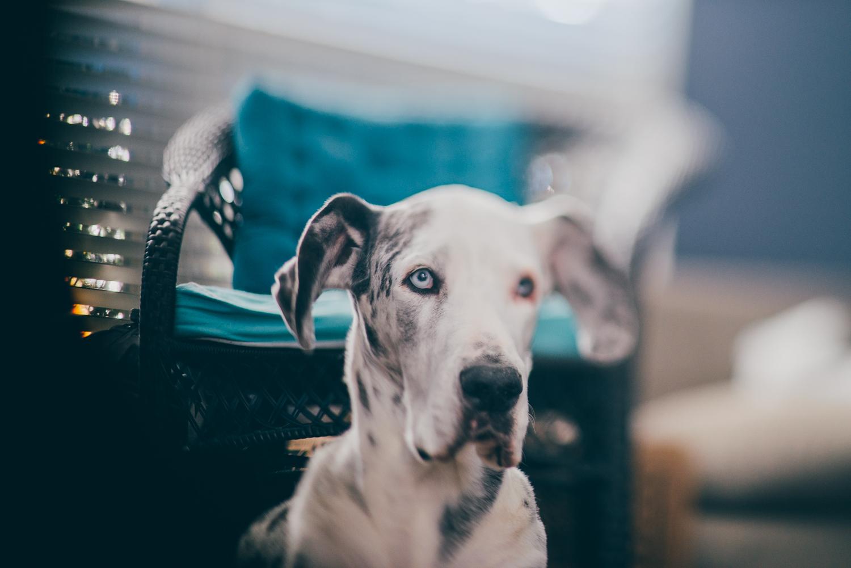 Pet-family-documentary-photography-houston