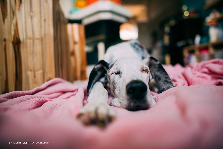Pet-houston-family-documentary-photography-1.jpg