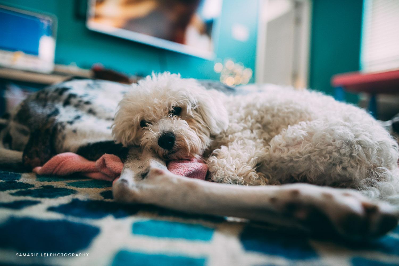 Pet-houston-family-documentary-photography-3.jpg