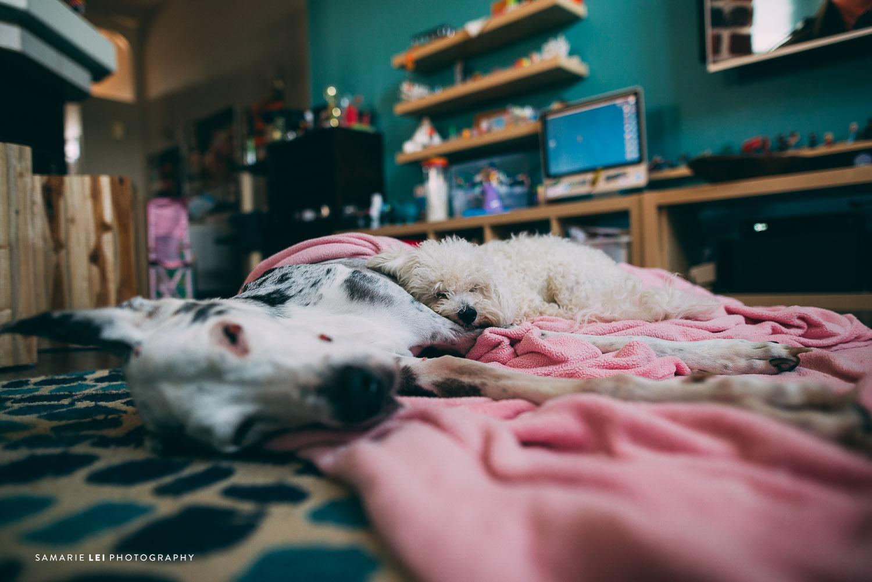 Pet-houston-family-documentary-photography-5.jpg