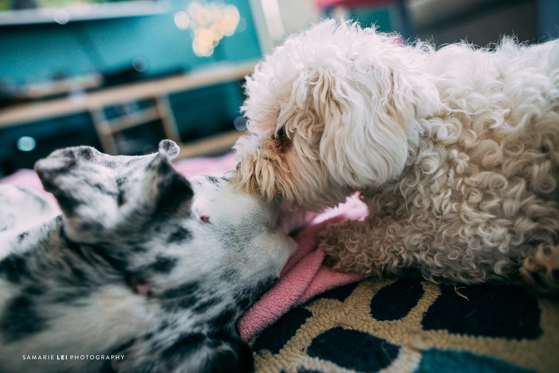 Pet-houston-family-documentary-photography-4.jpg