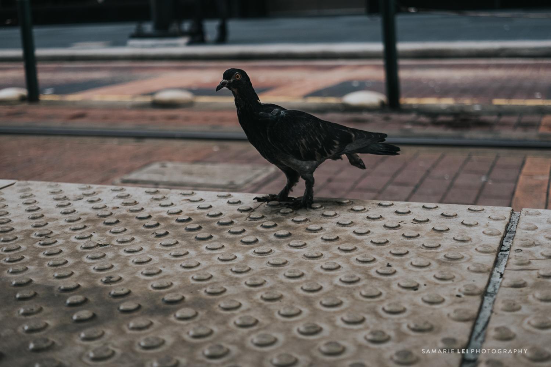 Houston-documentary-street-photography-downtown-16.jpg